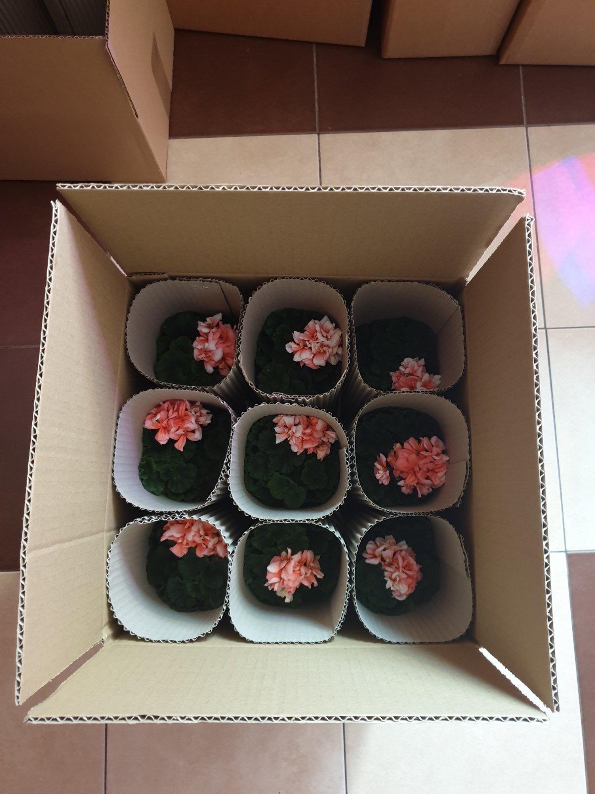 Gėlės dėžėje